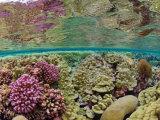Hard coral carpets a shallow seafloor on Kingman Reef
