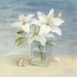 Lilies and Shells