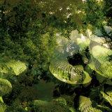 Vegetaux 14  2008