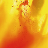 Yellow and Orange Swirling Abstract  c 2008