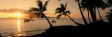 Silhouette of Palm Trees at Dusk, Lahaina, Maui, Hawaii, USA Papier Photo par Panoramic Images
