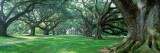 Louisiana  New Orleans  Oak Alley Plantation  Plantation Home Through Alley of Oak Trees