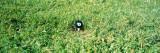 Eight Ball on a Golf Tee