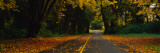 Autumn Leaves on the Road  Olympic Peninsula  Washington State  USA