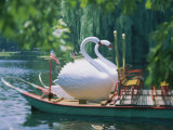 Swan Boats in a Lake  Boston Common  Boston  Massachusetts  USA