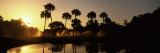 Silhouette of Palm Trees at Sunrise in a Golf Course, Kiawah Island Golf Resort, Kiawah Island Papier Photo par Panoramic Images
