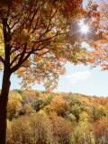 New York State  Allegheny State Park  Autumn in the Forest