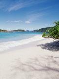 Us Virgin Islands  St John  Cinnamon Bay  Trees at the North Shore