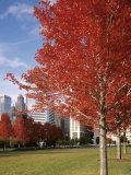 Illinois  Chicago  Millennium Park  Trees in a Park During Autumn