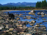 Wolf on Rocks at Edge of Flathead River