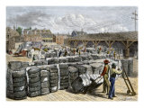 Black Stevedores Loading Bales on the Cotton Wharf in Charleston  South Carolina  1870s