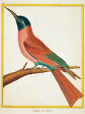 Color Lithographs with African Animals
