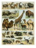 Mammals of Arid Regions
