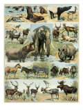 Some Wild Animals of the World