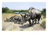 Extinct Species of Rhinoceros  Titanothere  Ancient South Dakota
