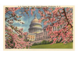 Capitol Through Cherry Blossoms