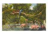 Macaws  Flamingos  Cockatoo  Florida