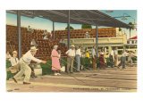 Shuffleboard  St Petersburg  Florida