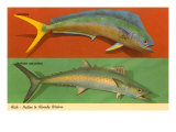 Fish Native to Florida Waters