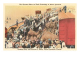 Circus Camels in Trains  Sarasota  Florida