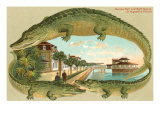 Alligators  Sea Wall  St Augustine  Florida