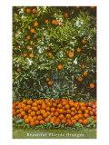 Oranges  Florida