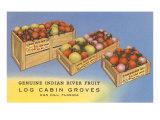 Fruit in Crates  Oak Hill  Florida