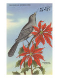 Florida Mocking Bird  Poinsettias