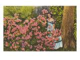 Azaleas  Cypress Gardens  Florida