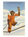 Chimp  Sarasota  Florida