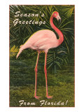 Season Greetings from Florida  Flamingo