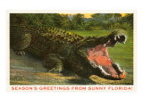 Seasons Greetings from Sunny Florida  Alligator