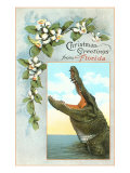 Christmas Greetings from Florida  Alligator
