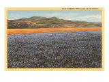 Wildflowers in Spring  California