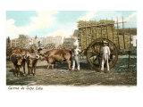 Sugar Cane Cart  Cuba