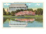 Lincoln Memorial  Cherry Blossoms  Washington DC