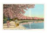 Japanese Children  Cherry Blossoms  Washington DC