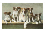 Family of Collies