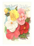 Seed Packet for Tuberous Begonias