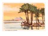 Pyramids from across the Nile  Palms  Camels  Egypt