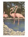 Flamingos  Florida