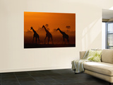 Giraffes Silhouetted at Twilight