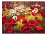 Meadow Poppies II