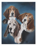 Bassett Hounds