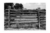 Cedar Fence Bw