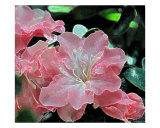 Fantasy Azalea Glow