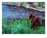 070709 Black Bear Alaska