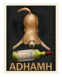 Adhamh - Golden Retriever
