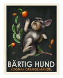 Bartig Hund - Schnauzer