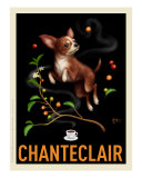 Chanteclair - Chihuahua
